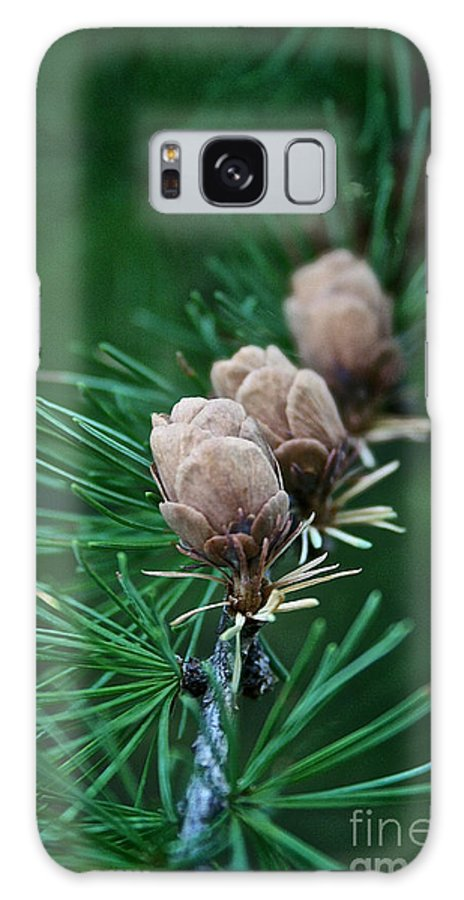 Plant Galaxy S8 Case featuring the photograph Tamarack Trio by Susan Herber