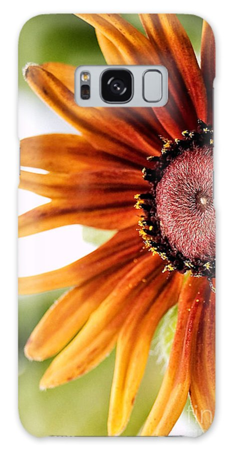 Flower Galaxy S8 Case featuring the photograph Tequila Sunrise by Susan Smith