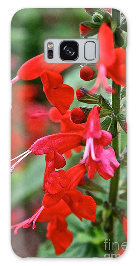 Floral Galaxy S8 Case featuring the photograph Texas Sage by Susan Herber