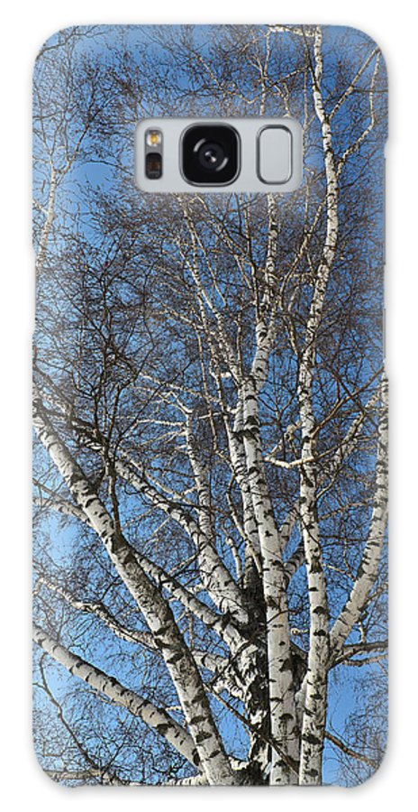 Abstract Galaxy S8 Case featuring the photograph The Birch by Michael Goyberg