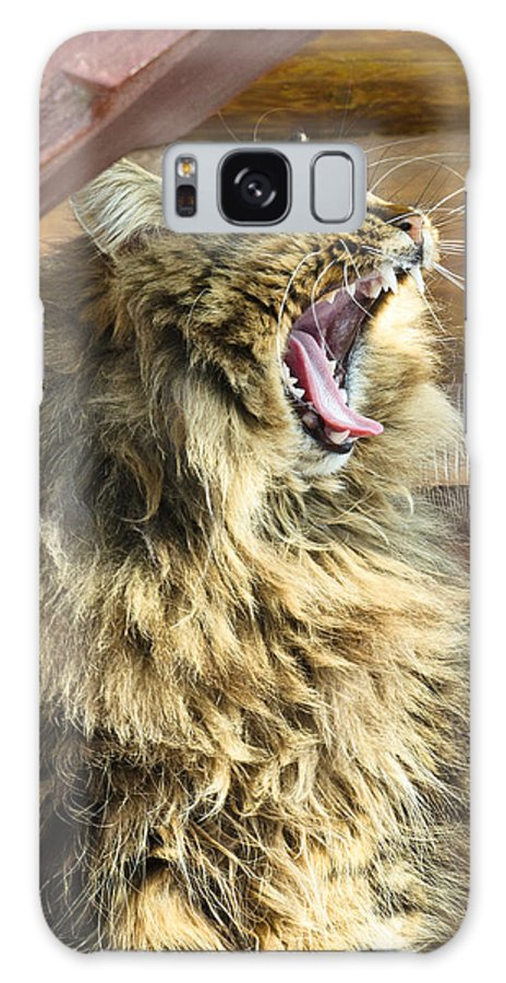 Bay Galaxy S8 Case featuring the photograph The Cat Who Loves To Sing by Michael Goyberg