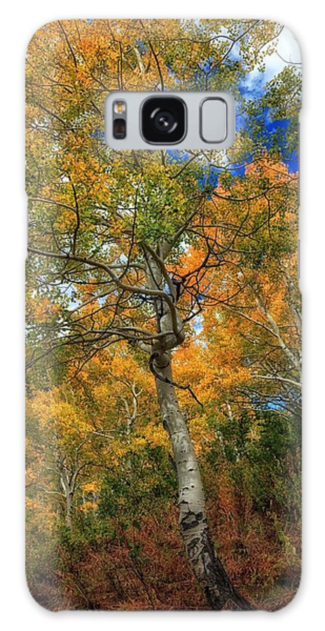 Aspens Galaxy S8 Case featuring the photograph The Colors Of The Aspen Forest by Mitch Johanson