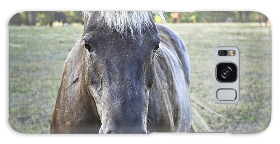Horses Galaxy S8 Case featuring the photograph The Farmers Horse by Kim Henderson