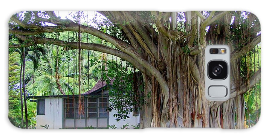 House Galaxy S8 Case featuring the photograph The House Beside The Banyan Tree by Mary Deal