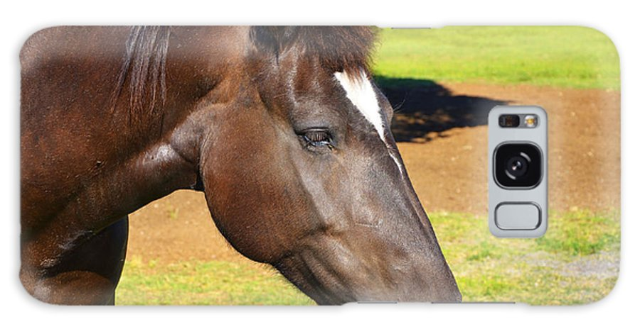Pinto Horse Galaxy S8 Case featuring the photograph The Pinto by Paul Mashburn