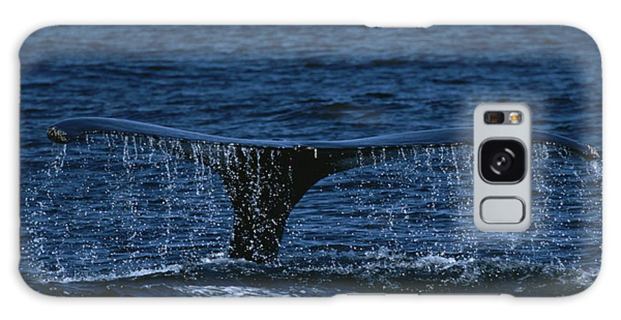 Water Galaxy S8 Case featuring the photograph The Tail Flukes Of A Humpback Whale by Tim Laman