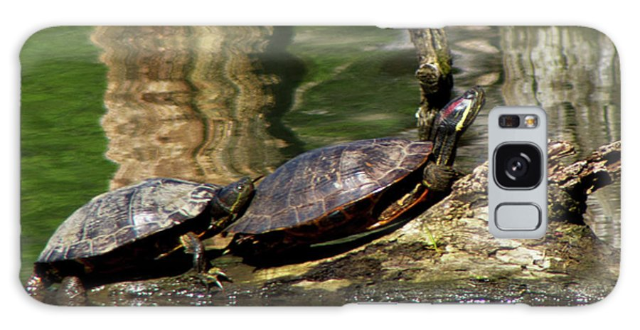 Turtles Galaxy S8 Case featuring the photograph The Turtles by Carolyn Fox