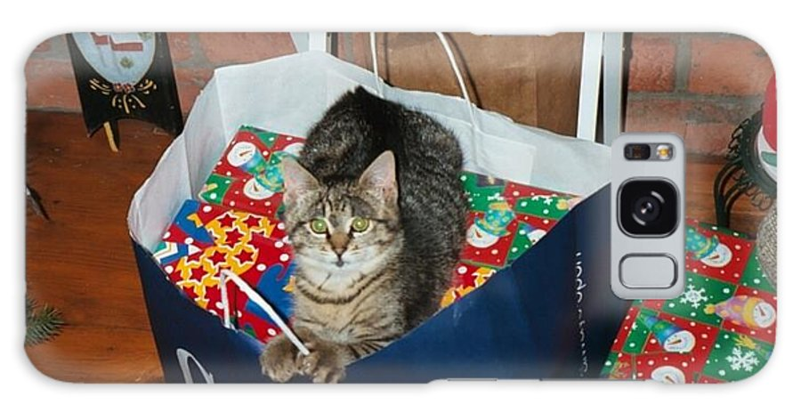 Kitten Galaxy S8 Case featuring the photograph These Are Mine by Kim Galluzzo Wozniak