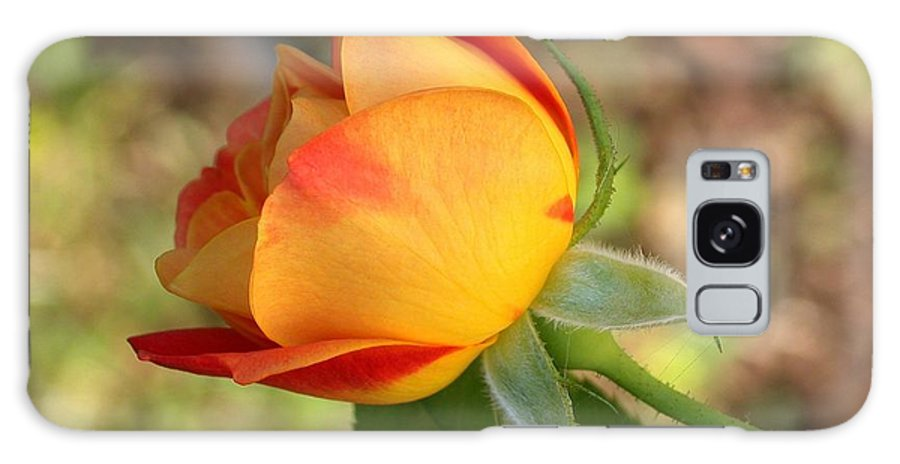 Flower Galaxy S8 Case featuring the photograph This Bud's For You by Living Color Photography Lorraine Lynch