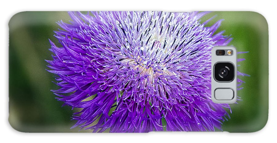 Wildflower Galaxy S8 Case featuring the photograph Thistle I by Tamyra Ayles
