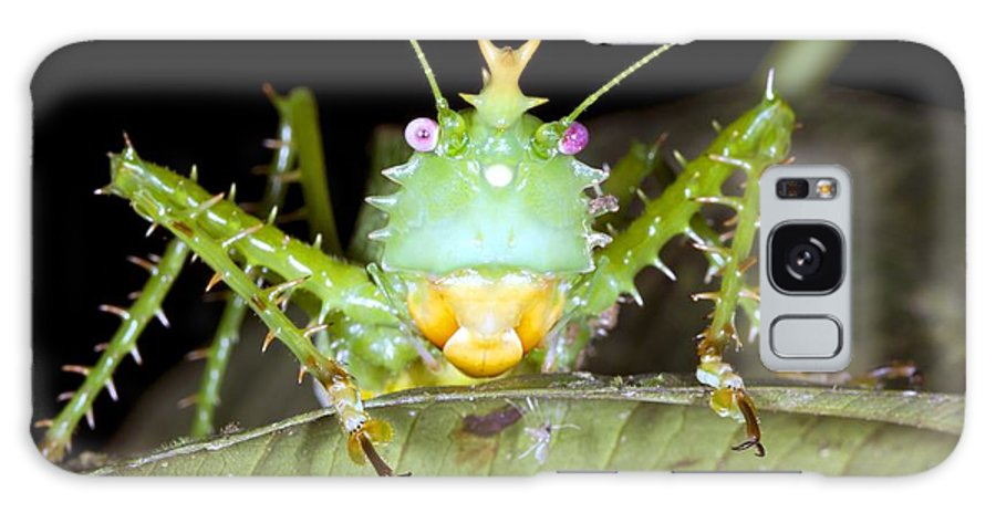 Thorny Devil Galaxy S8 Case featuring the photograph Thorny Devil Bush Cricket by Dr Morley Read