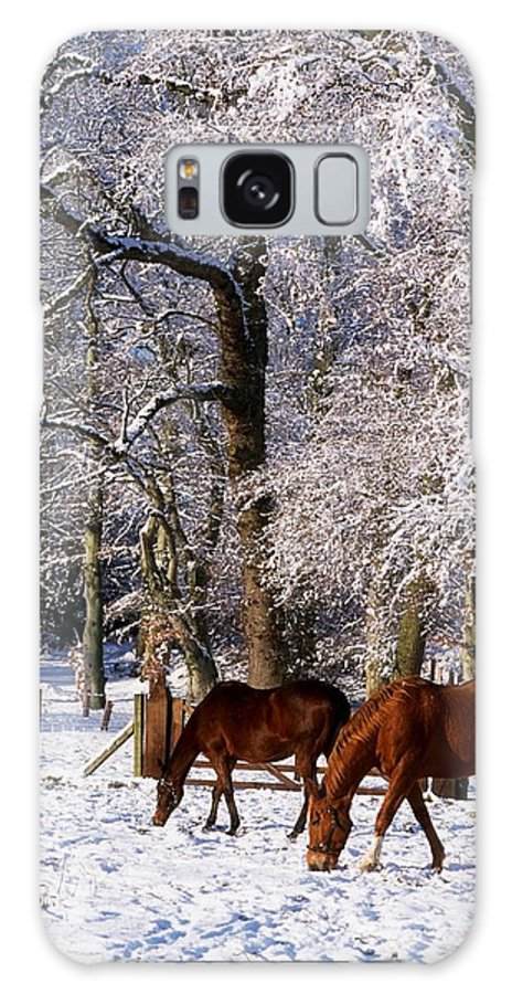 Cold Galaxy S8 Case featuring the photograph Thoroughbred Horses, Mares In Snow by The Irish Image Collection