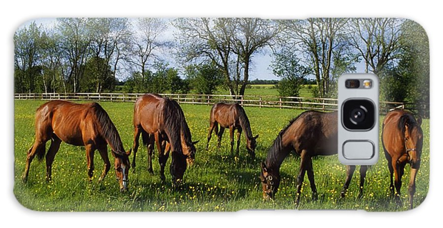 Color Image Galaxy S8 Case featuring the photograph Thoroughbred Horses, Yearlings, Ireland by The Irish Image Collection