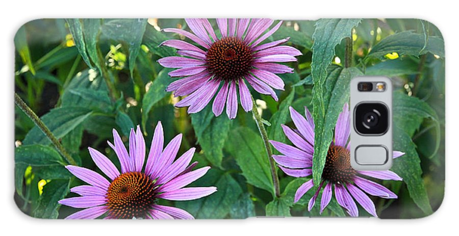 Flowers Galaxy S8 Case featuring the photograph Three Coneflowers by Steve McKinzie