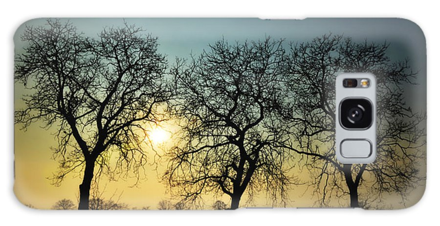 Sun Galaxy S8 Case featuring the photograph Three Trees by Mats Silvan