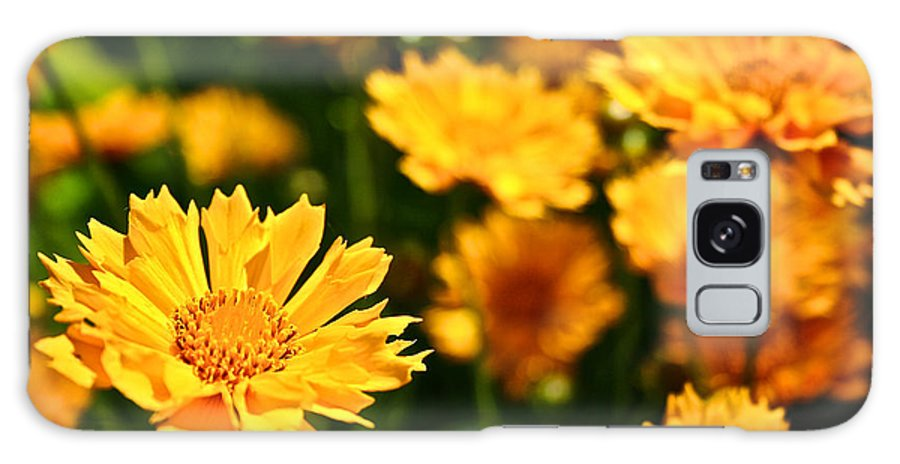 Garden Galaxy S8 Case featuring the photograph Tickseed by Susan Herber