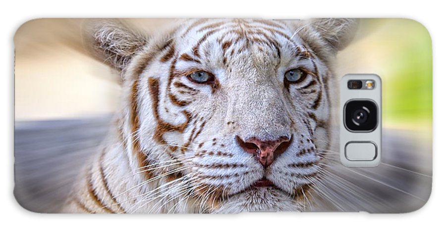White Tiger Galaxy S8 Case featuring the photograph Tiger Blur by Steve McKinzie