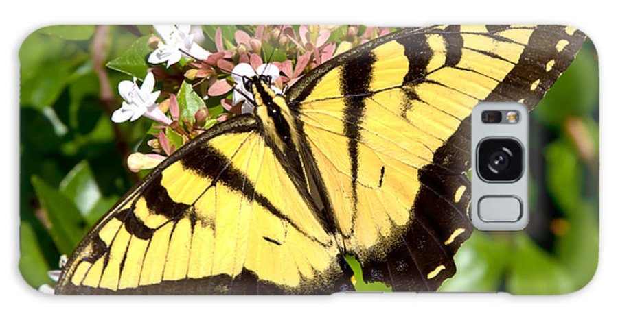 Butterfly Galaxy S8 Case featuring the photograph Tiger Swallowtail by Lynne Jenkins