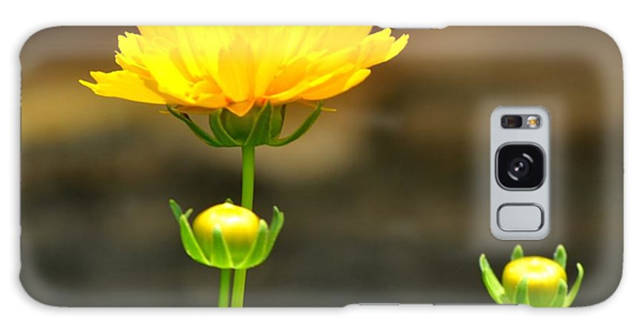 Flower Galaxy S8 Case featuring the photograph Times Three by Maria Urso