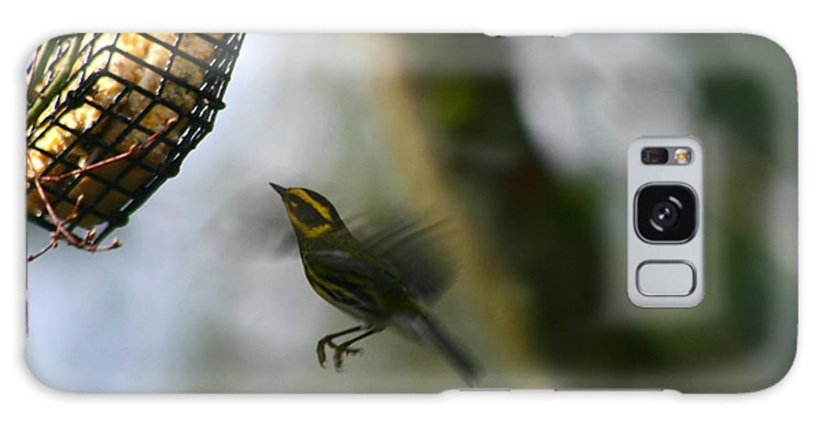 Birds Galaxy S8 Case featuring the photograph Townsend Warbler In Flight by Kym Backland