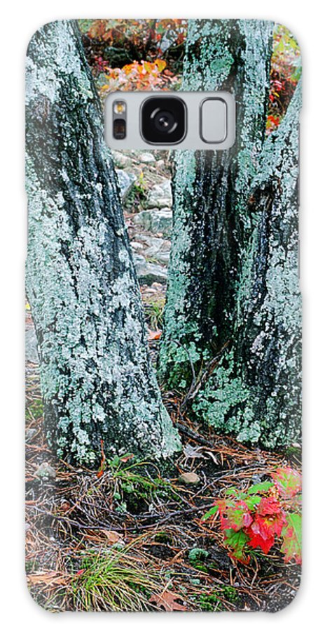 Trees Galaxy S8 Case featuring the photograph Tree Trio In Lichen At Hawn State Park by Greg Matchick