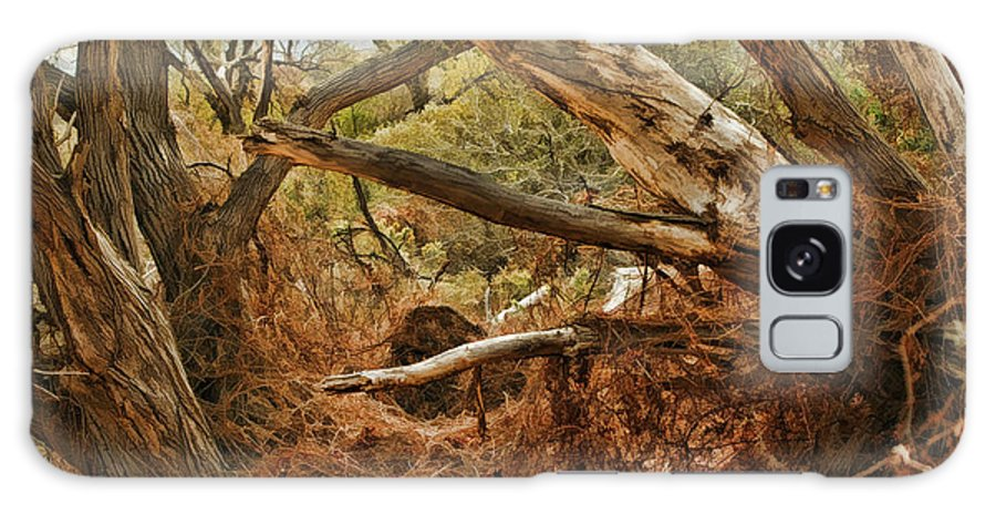 Fine Art Photographers Galaxy S8 Case featuring the photograph Tree Woods by Blake Richards