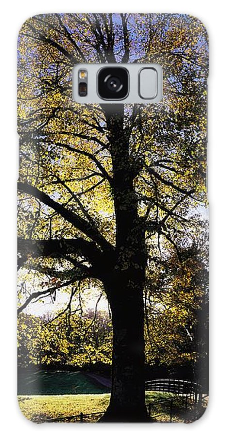 Beauty Galaxy S8 Case featuring the photograph Trees During Autumn by The Irish Image Collection