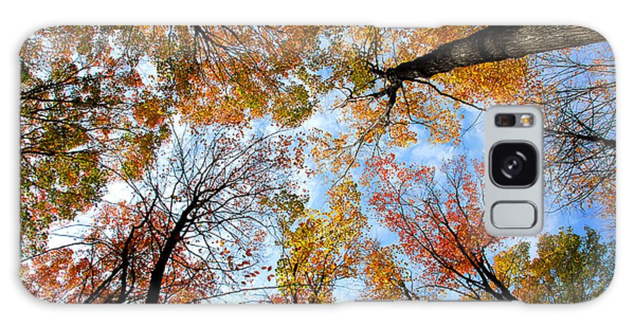 Fall Galaxy S8 Case featuring the photograph Treetops by Elena Elisseeva