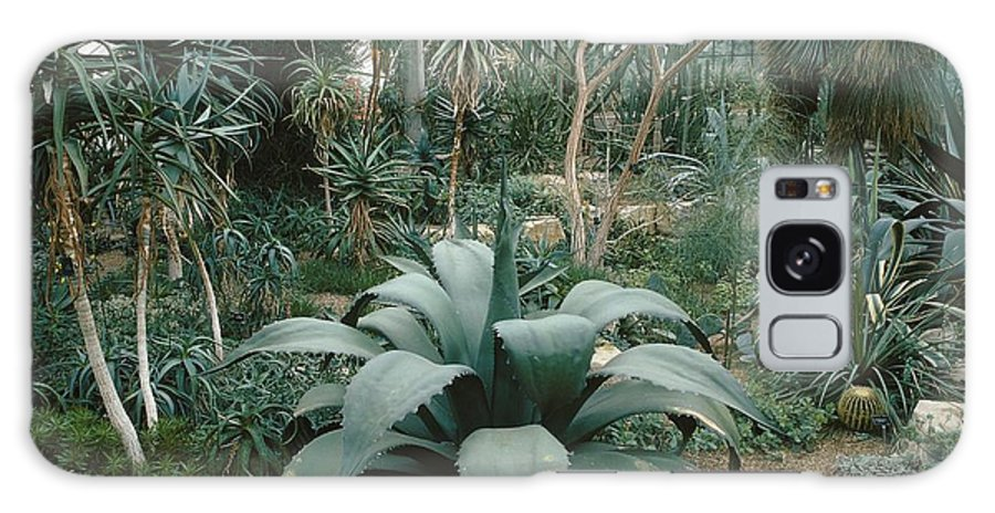 Agave Ferox Galaxy S8 Case featuring the photograph Tropical Conservatory, Kew Gardens by Vaughan Fleming