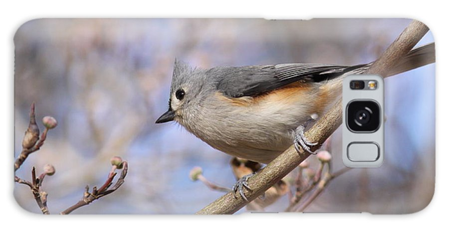 Tufted Titmouse Galaxy S8 Case featuring the photograph Tufted Titmouse - On The Slope by Travis Truelove