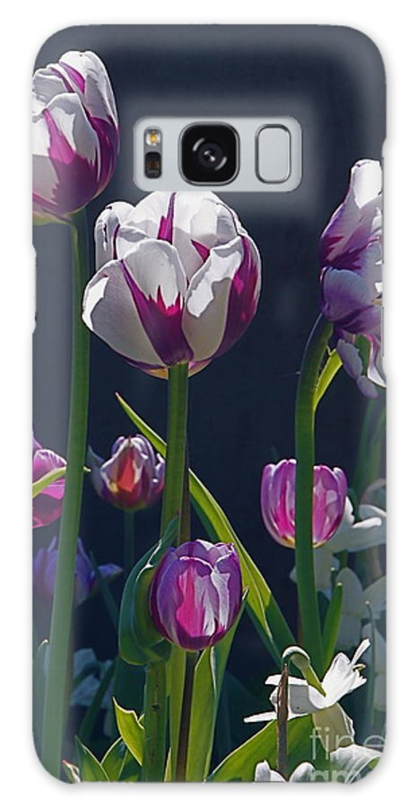 Tulip Galaxy S8 Case featuring the photograph Tulip Springtime Memories by Byron Varvarigos
