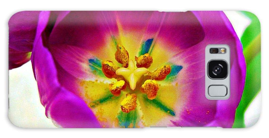 Tulip Galaxy S8 Case featuring the photograph Tulip by Tisha Clinkenbeard