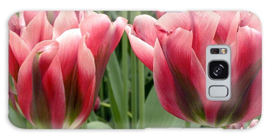 Tulip Galaxy S8 Case featuring the photograph Tulipa Viridiflora 'adrian T Dominique' by Adrian Thomas
