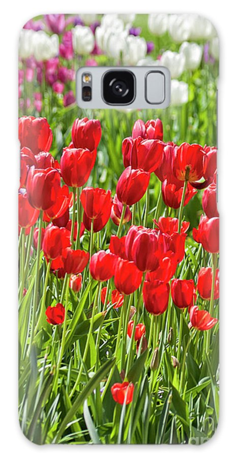 Red Galaxy S8 Case featuring the photograph Tulips Galore by Carolyn Fox