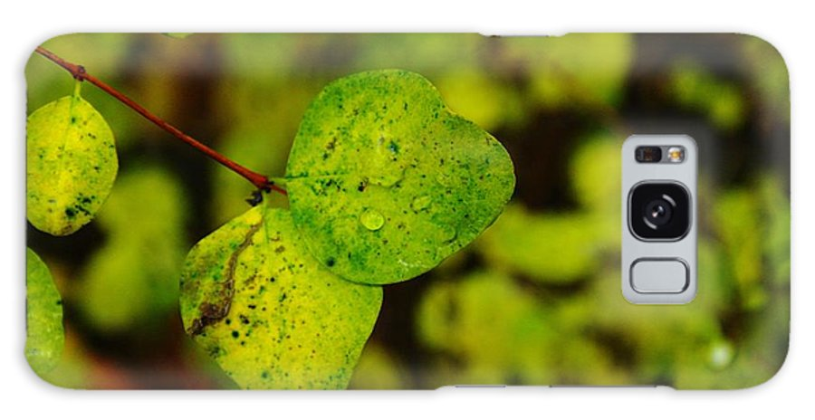 Leaves Galaxy S8 Case featuring the photograph Two Of A Kind by Jeff Swan