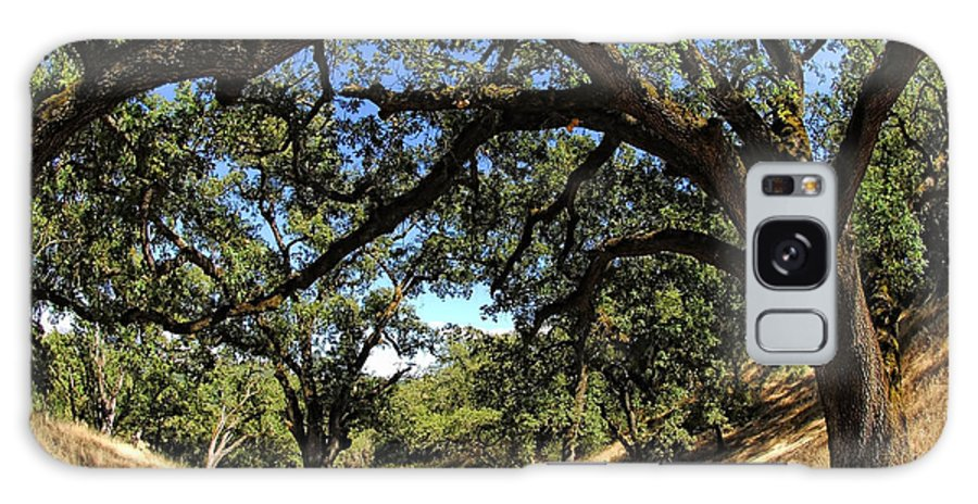 California Galaxy S8 Case featuring the photograph Under The Oak Canopy by Donna Blackhall