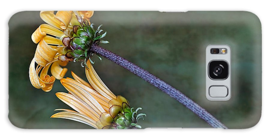 Photography Galaxy S8 Case featuring the photograph Unfurling Daisy by Kaye Menner