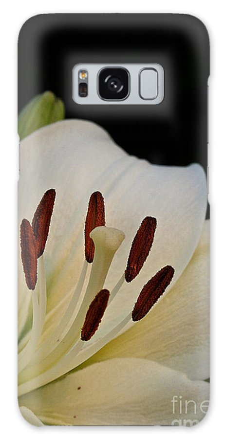 Outdoors Galaxy S8 Case featuring the photograph Vanilla Lily by Susan Herber