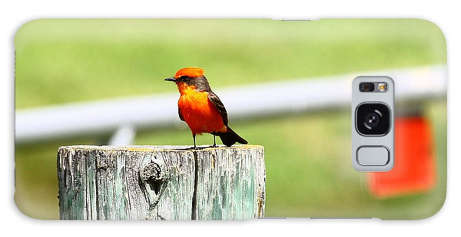 Bird Galaxy S8 Case featuring the photograph Vermilion Flycatcher by Diana Hatcher