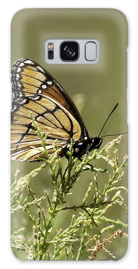 Viceroy Butterfly Galaxy S8 Case featuring the photograph Viceroy Butterfly by Betty Depee