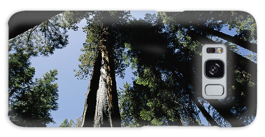 sequoiadendron Giganteum Galaxy S8 Case featuring the photograph View Looking Up The Trunks Of Giant by Phil Schermeister
