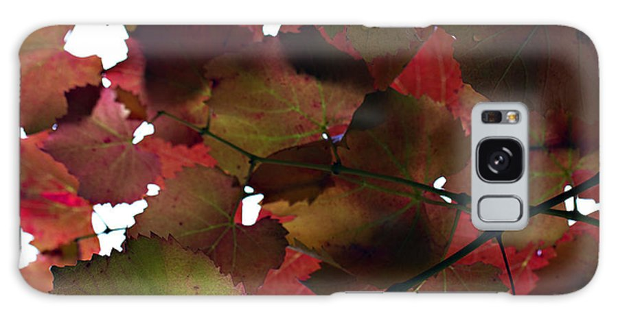 Vine Leaves Galaxy S8 Case featuring the photograph Vine Leaves by Douglas Barnard