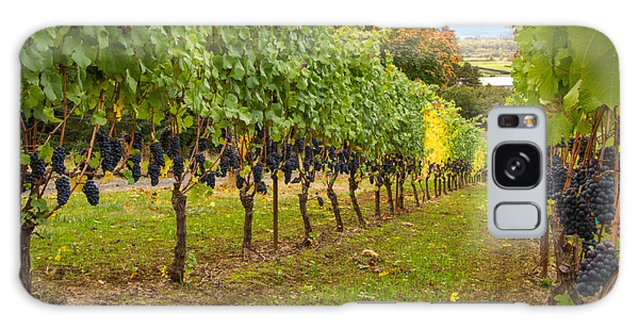 Vineyard Galaxy S8 Case featuring the photograph Vineyard by Jean Noren