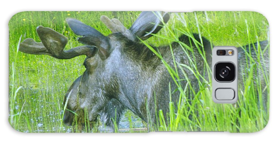Moose Galaxy S8 Case featuring the photograph Wading In by Jeff Swan