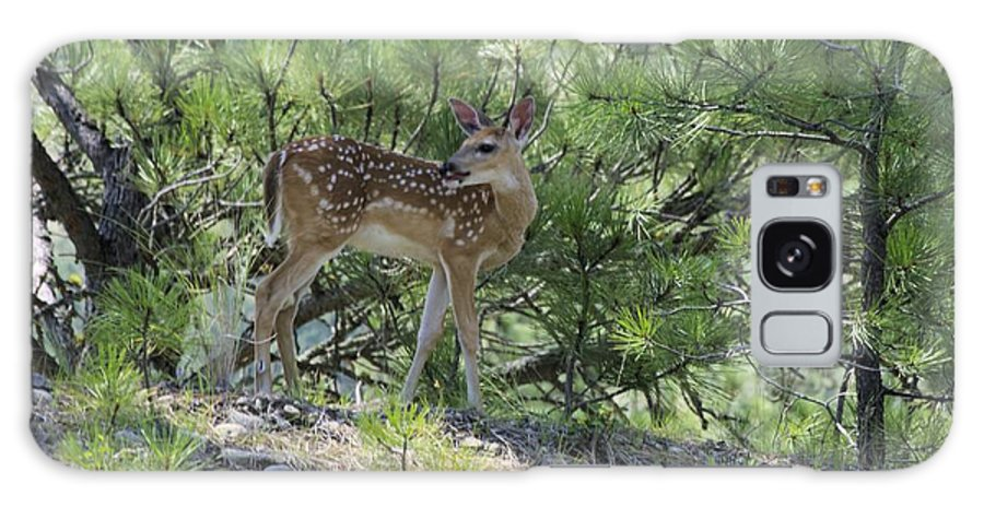 Fawn Galaxy S8 Case featuring the photograph Waiting On Mom by John Greaves