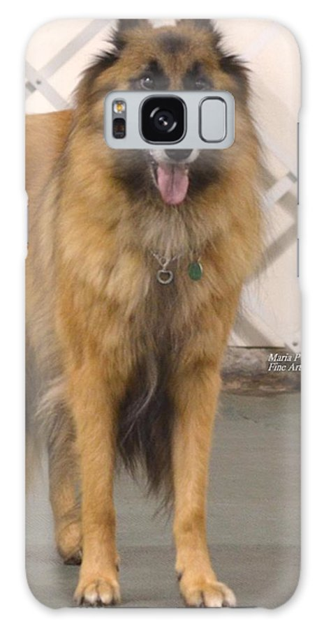 Belgian Tervuran Galaxy S8 Case featuring the photograph Waiting On You by Maria Urso