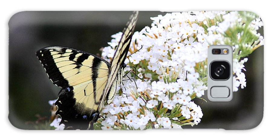 Swallowtail Butterfly Galaxy S8 Case featuring the photograph Walking Uphill by Travis Truelove