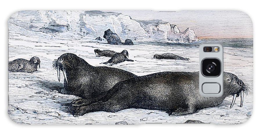 19th Century Galaxy S8 Case featuring the photograph Walruses On Ice Field by Granger