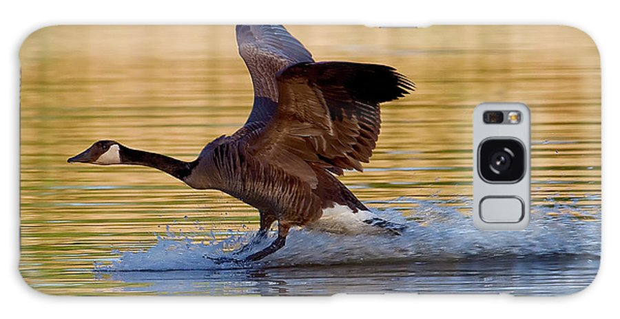 Species Branta Canadensis Galaxy S8 Case featuring the photograph Water Landing by Bill Lindsay