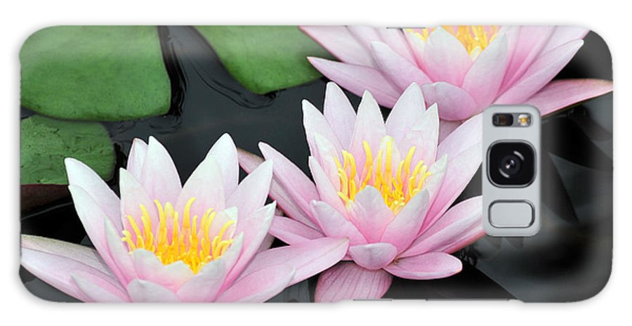 Water Lilies Galaxy S8 Case featuring the photograph water lily 88 Sunny Pink Water Lily with Reflection by Terri Winkler